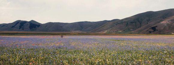 Il Parco Nazionale dei Monti Sibillini è il futuro e una risorsa importante per la ripresa economica delle aree terremotate