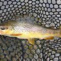 """La pesca si tutela salvaguardando i fiumi e biodiversità non con la """"pronta pesca""""."""