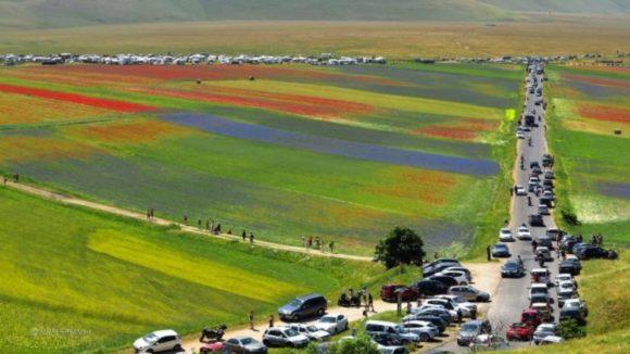Fioritura di Castelluccio, servono soluzioni definitive e sostenibili e non interventi spot